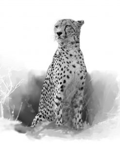 cheetah_original